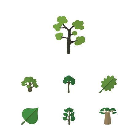 alder: Flat Icon Nature Set Of Baobab, Alder, Hickory And Other Vector Objects. Also Includes Hickory, Foliage, Baobab Elements.