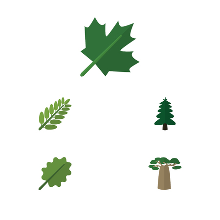 aspen leaf: Flat Icon Nature Set Of Baobab, Oaken, Leaves And Other Vector Objects. Also Includes Oak, Acacia, Leaf Elements.