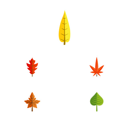 aspen leaf: Flat Icon Maple Set Of Hickory, Frond, Alder And Other Vector Objects. Also Includes Foliage, Aspen, Hickory Elements. Illustration
