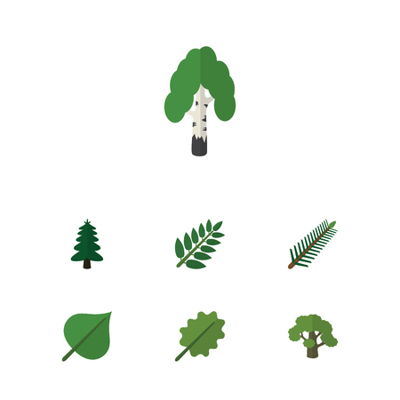 aspen leaf: Flat Icon Bio Set Of Alder, Spruce Leaves, Park And Other Vector Objects. Also Includes Leaves, Tree, Acacia Elements. Illustration