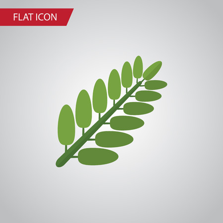 Isolated Acacia Leaf Flat Icon. Leaves Vector Element Can Be Used For Acacia, Leaf, Leaves Design Concept.