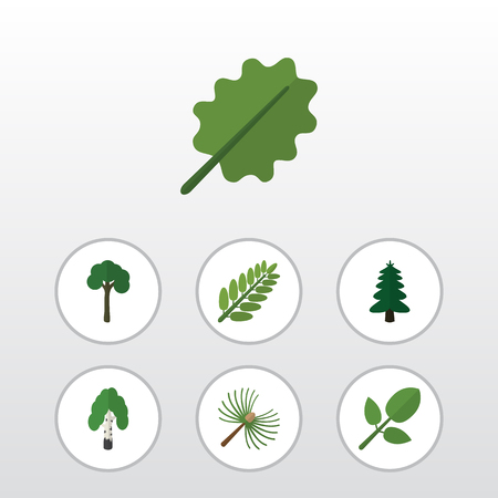alder: Flat Icon Bio Set Of Alder, Leaves, Evergreen And Other Vector Objects. Also Includes Tree, Park, Leaves Elements. Illustration