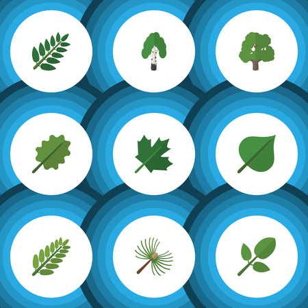 aspen leaf: Flat Icon Nature Set Of Timber, Leaves, Alder And Other Vector Objects. Also Includes Tree, Acacia, Foliage Elements. Illustration