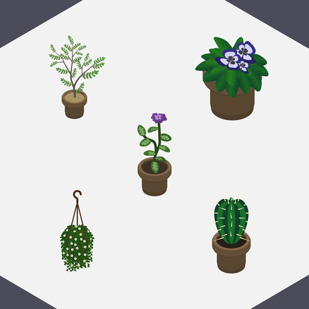 isometric houseplant set of blossom plant fern and other vector