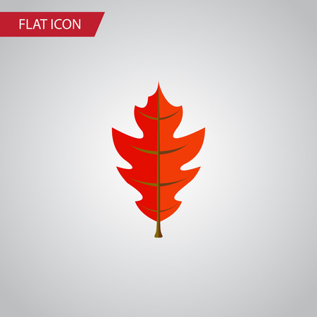fall leaves: Isolated Linden Flat Icon