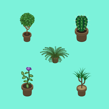 peyote: Isometric Houseplant Set Of Plant, Peyote, Houseplant And Other Vector Objects