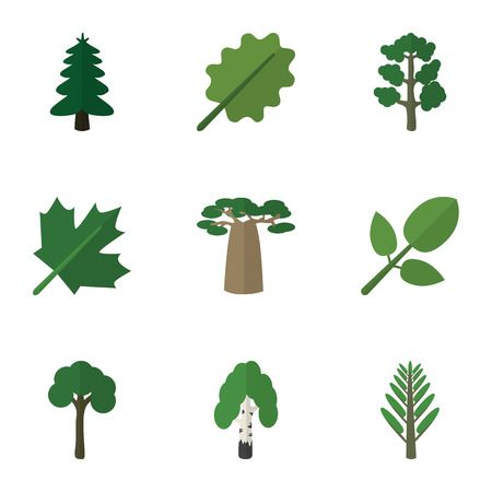 alder: Flat Icon Ecology Set Of Oaken, Park, Baobab And Other Vector Objects