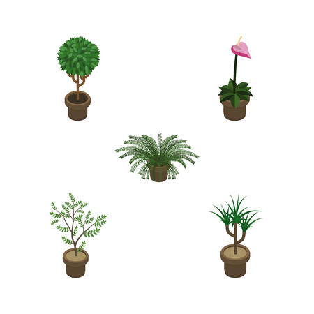 Isometric Flower Set Of Fern, Tree, Houseplant And Other Vector Objects. Also Includes Flower, Pot, Flowerpot Elements.