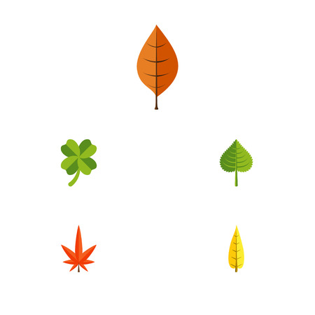 Flat Icon Leaves Set Of Hickory, Leafage, Maple And Other Vector Objects. Also Includes Leaf, Alder, Foliage Elements.