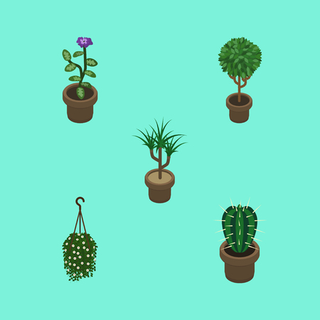 peyote: Isometric Flower Set Of Peyote, Blossom, Houseplant And Other Vector Objects. Also Includes Cactus, Flowerpot, Hanging Elements. Illustration