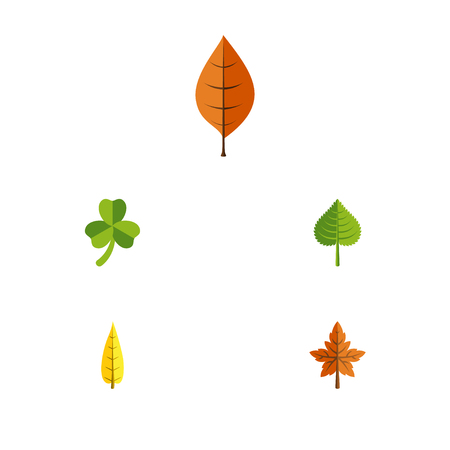 Flat Icon Leaf Set Of Hickory, Foliage, Alder And Other Vector Objects. Illustration