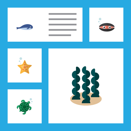 Flat icon sea set of scallop, tortoise, alga and other objects. Illustration
