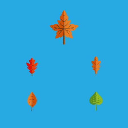 Flat Icon Leaves Set van hickory, gebladerte, Linden en andere vectorobjecten. Omvat ook gebladerte, varenblad, Linden Elements.