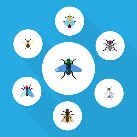 Flat Icon Fly Set Of Dung, Hum, Mosquito And Other Vector Objects. Also Includes Hum, Bluebottle, Mosquito Elements. Illustration