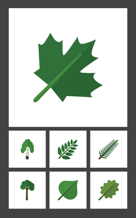 Flat Icon Ecology Set Of Acacia Leaf, Alder, Timber And Other Vector Objects. Also Includes Birch, Alder, Leaves Elements. Illustration