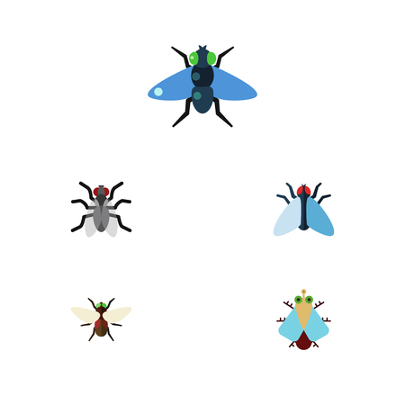 Flat Icon Fly Set Of Bluebottle, Dung, Gnat And Other Vector Objects. Also Includes Bluebottle, Hum, Tiny Elements. Illustration