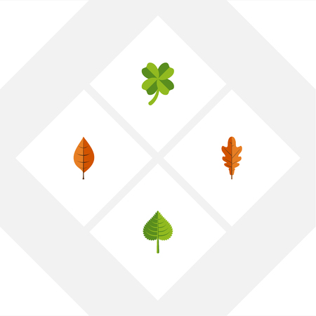 Flat Icon Leaf Set Of Hickory, Foliage, Leafage And Other Vector Objects. Also Includes Foliage, Linden, Hickory Elements.