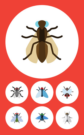 Flat Icon Fly Set Of Housefly, Mosquito, Hum And Other Vector Objects. Also Includes Fly, Insect, Tiny Elements. Illustration