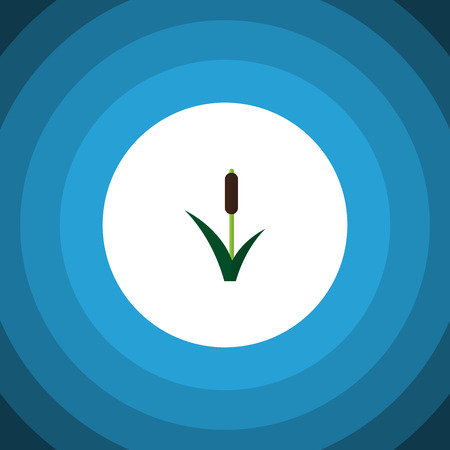 park: Cattail Vector Element Can Be Used For Cattail, Reed, Grass Design Concept.  Isolated Reed Flat Icon.
