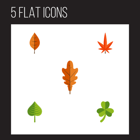 autumn colour: Flat Icon Maple Set Of Leaf, Hickory, Foliage And Other Vector Objects