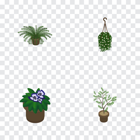Isometric flower set of flowerpot, plant, blossom and other objects.