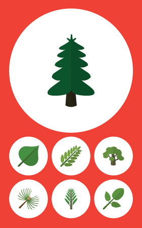 Flat Icon Nature Set Of Rosemary, Foliage, Tree And Other Vector Objects. Also Includes Park, Jungle, Acacia Elements.