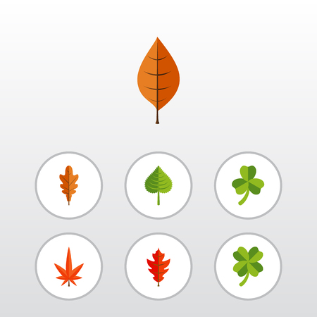 Flat Icon Leaves Set Of Aspen, Frond, Hickory And Other Vector Objects. Also Includes Aspen, Leafage, Linden Elements.