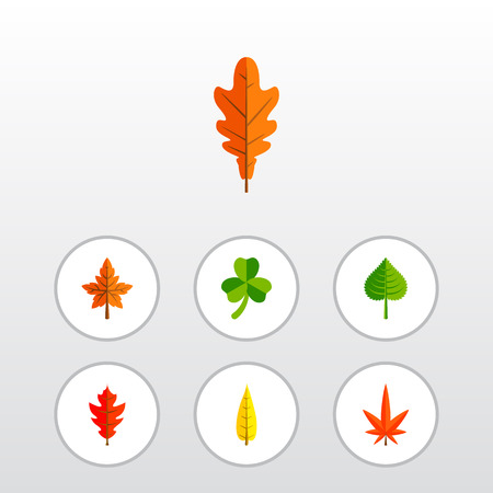 Icon flat leaf set of frond, alder, oaken and other vector objects. Also includes leaf, linden, frond elements.