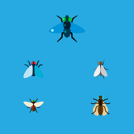 Icon flat fly set of gnat, tiny, dung and other  objects. Also includes fly, bluebottle, hum elements.