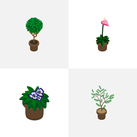 Isometric flower set of houseplant, flower, blossom and other vector objects. Also includes plant, flowerpot, flower elements.