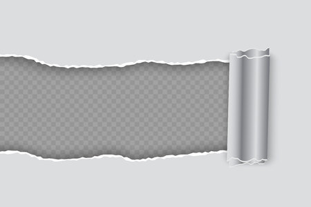 Vector realistic torn paper with rolled edge on transparent background
