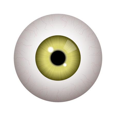 Globo ocular humano realista sobre fondo blanco.