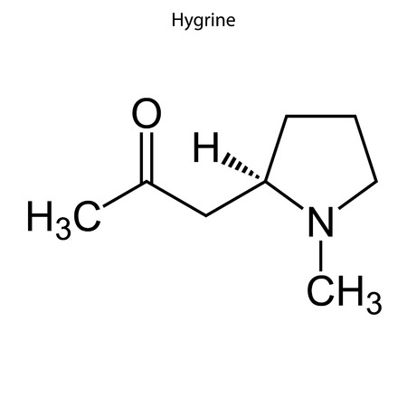 Skeletal formula of Hygrine. chemical molecule