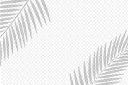 shadows overlay of palm leaf Template for your design