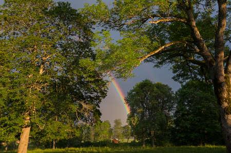 the end of a rainbow: El final de las tierras del arco iris entre los �rboles