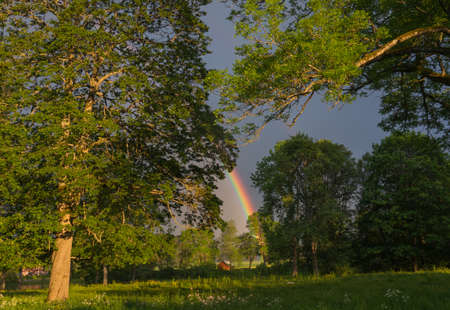 end of rainbow: The end of the rainbow lands between the trees