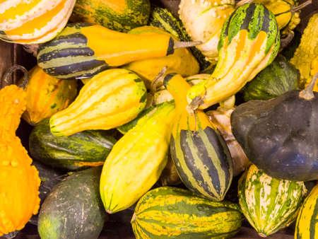 Pile of colorful decoration pumpkins in full autumn colors after harvest in oktober. Banque d'images
