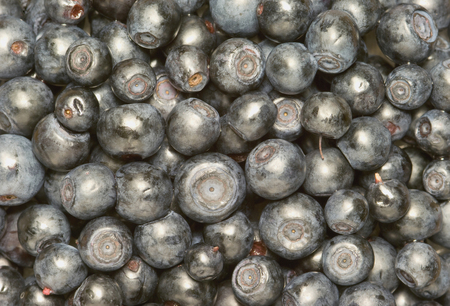 Bilberry-very a useful berry  it has a lot of vitamin-c