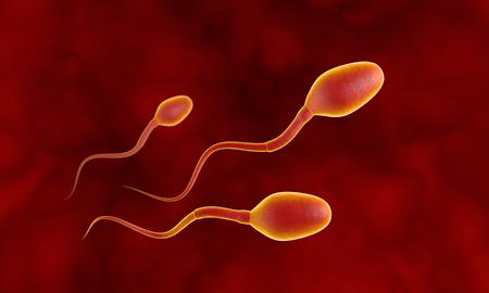 Tres espermatozoides competidores. Movimiento de los espermatozoides a través de las trompas de Falopio. Esperma, fertilización. Ilustración 3D. Disponible en alta resolución y varios tamaños para satisfacer las necesidades de su proyecto. Si usted compra esta imagen, le estaré muy agradecido