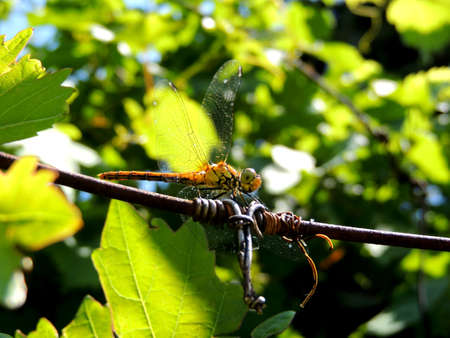 Close up photo of a dragonfly in the farm photo