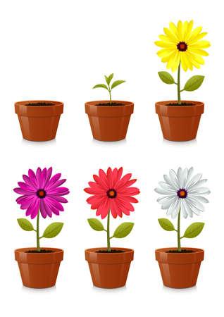 flower pot, isolated on white background
