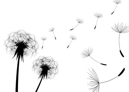 gravity: Blow Dandelions on white background.