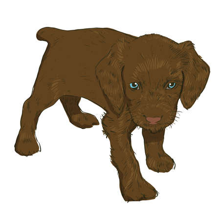 dedication: Little puppy on a white background. Vector illustration of a dog in the style of drawing