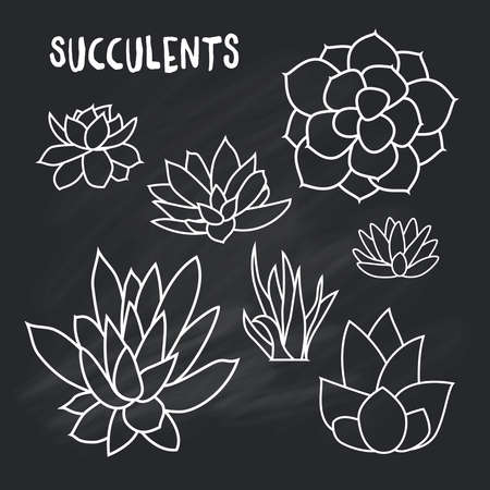 succulent: Graphic Set of succulents isolated on chalk board for design of cards, invitations. illustration Illustration