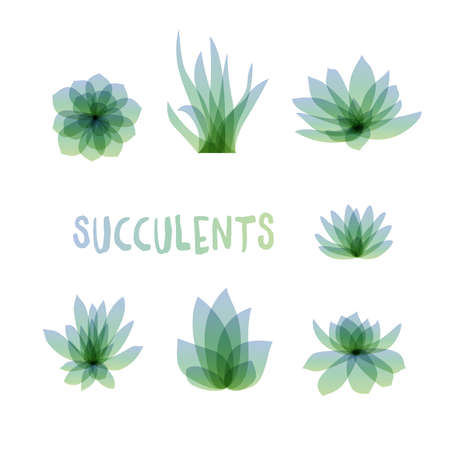 Graphic Set of succulents isolated on white background for design of cards, invitations. illustration