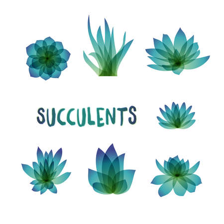 succulent: Graphic Set of succulents isolated on white background for design of cards, invitations. illustration