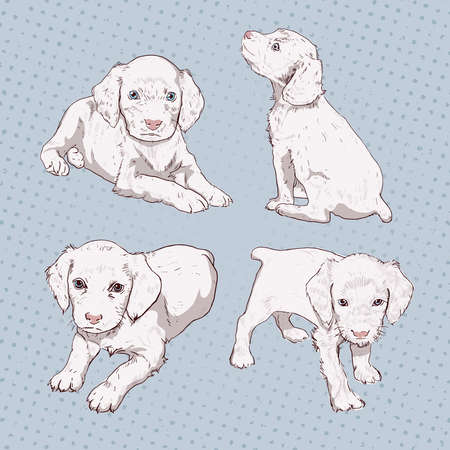 spaniel: Set of little puppy hand-drawing. Vector vintage illustration