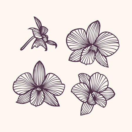 Stylized drawing orchids. Pattern of orchids. Vector orchids. Set of vector orchids. Isolated orchids on a light background