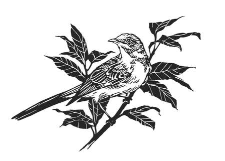 Bird on Branch. Engraving Linocut Style. Vector illustration