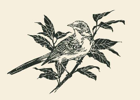 Bird on Branch. Engraving Linocut Style. Vector illustration Vector Illustration